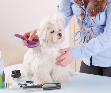 10 Essential Tips to Groom Your Dog